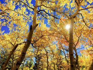 Na podzim se projeví i malé vady zraku